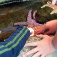 38_touching_starfish