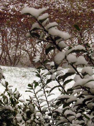 Snow plants
