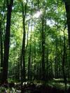 24_trees_2