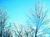 Snow_icy_trees