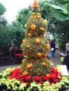 Tree_fruit