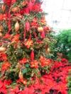 Tree_hibiscus