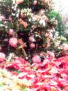 Tree_pink