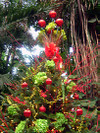 Tree_red_and_green_topper